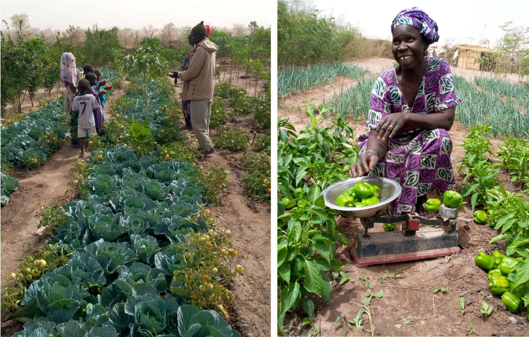 Kaffrine-3-Farmers_Trees_for_the_Future-opt